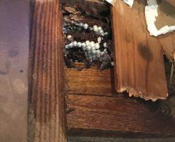 蜂の巣を即日駆除いたしました!