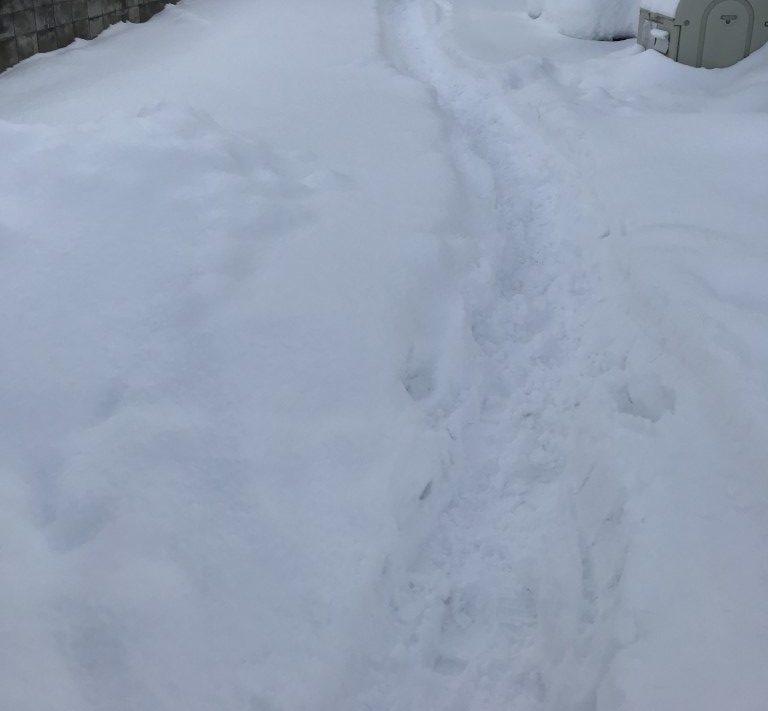 【弘前市茂森町】雪かきと雪の回収・処分ご依頼 お客様の声