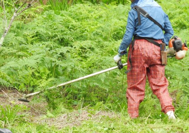 青森市で草刈りにかかる料金相場は?追加料金や業者選びのコツまで解説